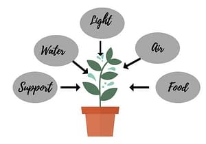 5 things a plant need to thrive : all elements