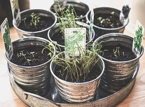 growing herbs in compost