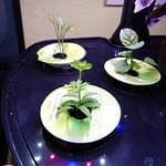 close up of plants in aerogarden harvest after 3 weeks